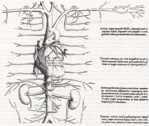 cuore ed arterie principali in Vesalio