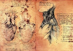 anatomia di leonardo da vinci