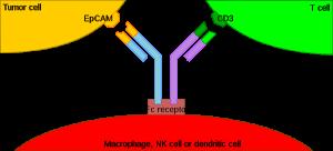 02meccanismo d'azione di catumaxomab