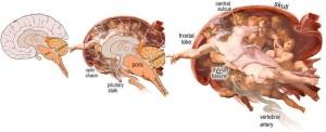 michelangelo-e-cervello