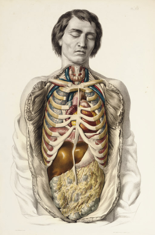 Medical Anatomy - (1869) by Francis Sibson - 2007_NYR_01885_0199_000()