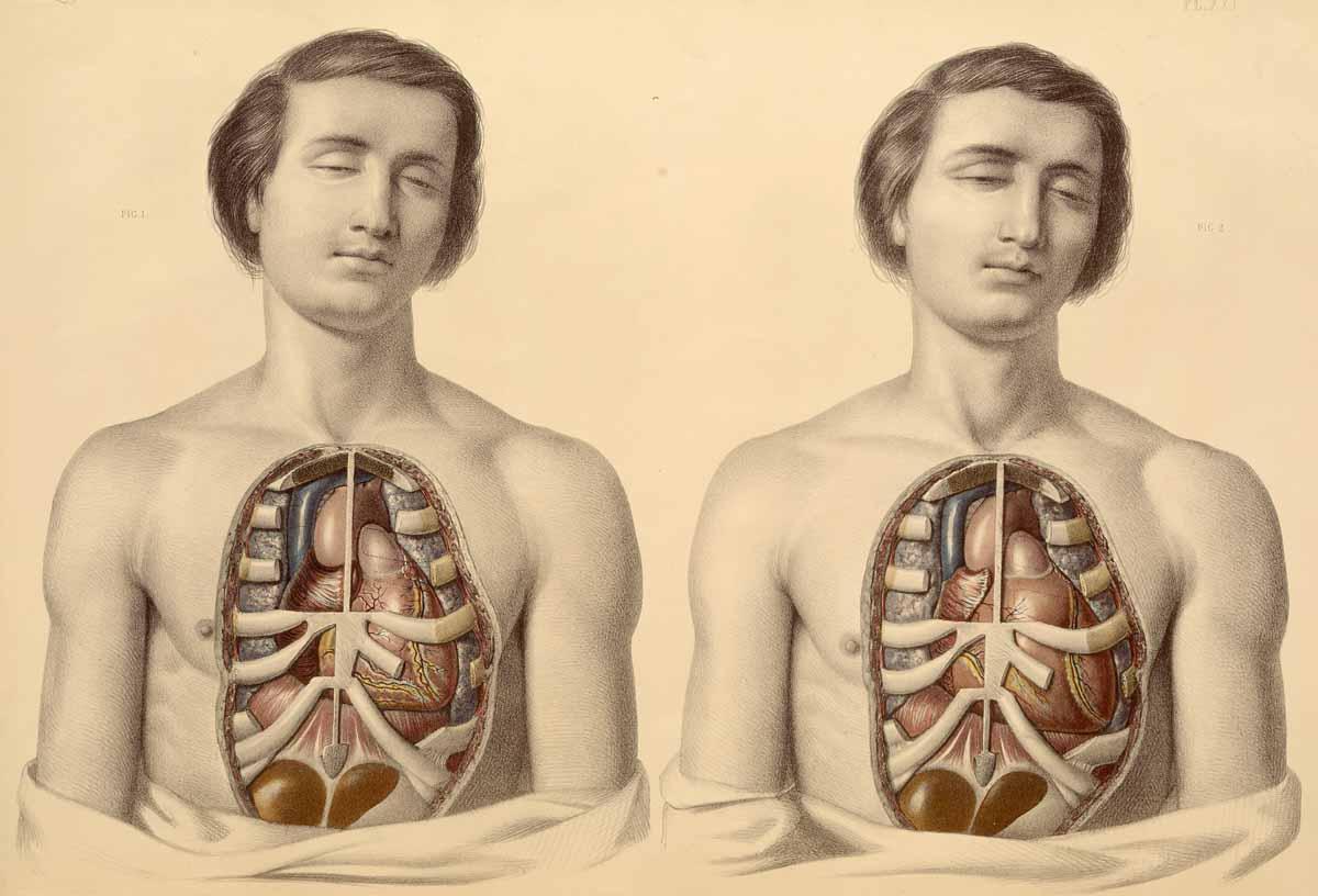 Medical Anatomy - (1869) by Francis Sibson - II-C-06
