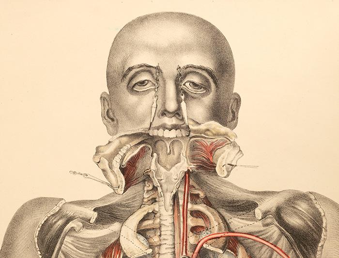 Medical Anatomy - (1869) by Francis Sibson - tavola anatomica